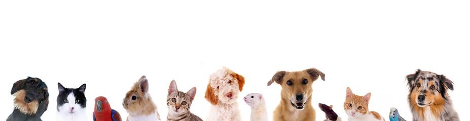 Зоомагазин, интернет-магазин зоотоваров для животных